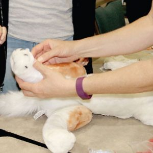 Pet CPR and Pet First Aid - Security Training Classes
